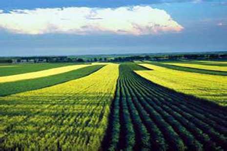 我國生物質能利用的現狀及發展對策
